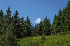 在Vitosha山的美好的风景,在索非亚保加利亚附近 库存照片