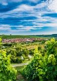 在Volkach附近的Wineyard 免版税库存照片