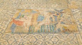 在Volubilis罗马废墟古老历史站点的精心制作的马赛克在梅克内斯,摩洛哥,非洲附近的 免版税图库摄影
