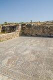 在Volubilis罗马废墟古老历史站点的精心制作的马赛克在梅克内斯,摩洛哥,非洲附近的 免版税库存图片