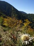 在Vrancea山的秋天 免版税库存图片