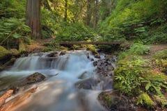 在Wahkeena峡谷足迹的落下的瀑布 免版税库存照片