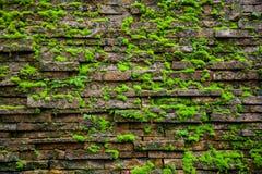 在wal的砖的青苔 免版税库存照片