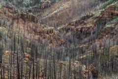 在Waldo峡谷森林火灾以后在科罗拉多 免版税库存图片