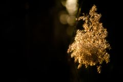 在Warriewood沼泽地的日落 免版税库存图片