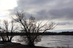 在Wascana湖雷日纳加拿大的荒凉的冬天场面 免版税库存图片