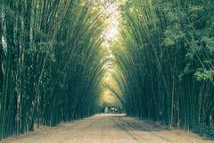 在Wat朱拉蓬Wanaram,禁令Phrik,禁令Na区,坤西育府,泰国街道的竹隧道  图库摄影