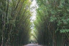 在Wat朱拉蓬Wanaram,禁令Phrik,禁令Na区,坤西育府,泰国街道的竹隧道  库存照片