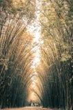 在Wat朱拉蓬Wanaram,禁令Phrik,禁令Na区,坤西育府,泰国街道的竹隧道  免版税库存照片