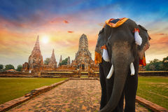 在Wat Chaiwatthanaram寺庙的大象在Ayuthaya,泰国 库存照片