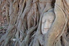在Wat Mahatat的菩萨头 免版税库存图片