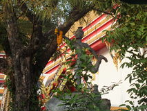 在Wat Pho寺庙地面的石雕象在曼谷,泰国 库存图片