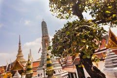 在wat phra kaew的形状的树 免版税库存照片