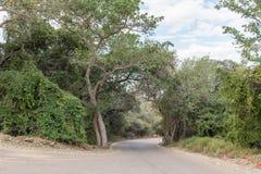 在Waterberg高原的路在奥奇瓦龙戈附近 免版税图库摄影