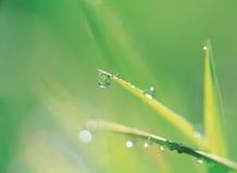 在waterdrop之下的叶子 免版税库存图片