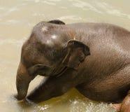在waterhole的印地安婴孩大象 库存图片