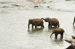 在waterhole的印度象家庭 库存图片