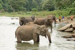 在waterhole的印度象 库存照片