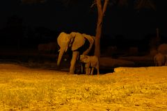 在waterhole的大象在Senyati徒步旅行队在晚上 免版税库存照片