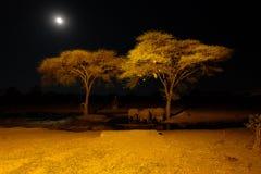 在waterhole的大象在Senyati徒步旅行队在晚上 免版税库存图片