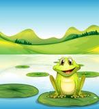 在waterlily池塘上的一只青蛙 免版税库存图片