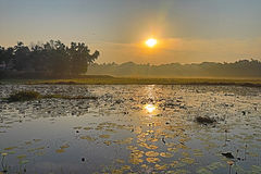 在waterlily池塘的金黄日出 图库摄影