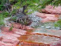 在waterton公园的红色峡谷 免版税库存照片