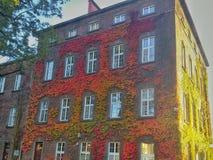 在Wawel的墙壁上的五颜六色的叶子防御 免版税库存照片