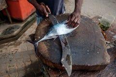在Weligama供以人员切开与巨大的刀子的新鲜的金枪鱼在斯里兰卡 免版税图库摄影