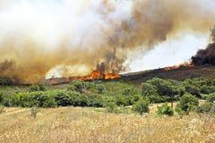 在westcoast的巨大的灌木火在葡萄牙 库存图片