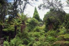 在whakarewarewa上升暖流谷附近的密集的森林 图库摄影