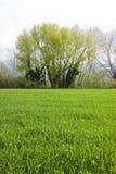 在wheatfield的树 免版税库存图片