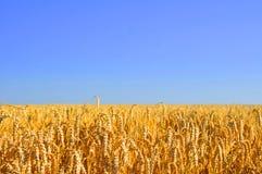 在wheatfield的蓝天 免版税库存照片