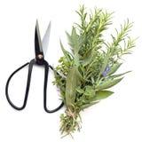 在Whi有剪刀顶视图隔绝的花束Garni新鲜的草本 免版税库存图片