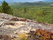 在Whitehorse育空加拿大附近的岩石taiga地形 免版税库存图片