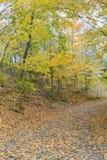 在Wilket小河公园的秋天风景在多伦多 免版税库存照片