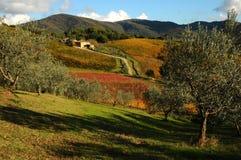 在Wineyards的秋天大气在托斯卡纳, Chianti,意大利 免版税库存照片