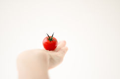 在Womans现有量的樱桃Tomatoe 库存图片