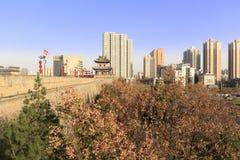 在xian古城下墙壁的Koelreuteria中华的森林  免版税库存图片