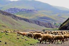 在Xinaliq,阿塞拜疆,大高加索山脉范围的遥远的山村附近的牧羊人 库存照片