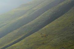 在Xinaliq,阿塞拜疆,大高加索山脉范围的遥远的山村附近的牧羊人 免版税库存图片