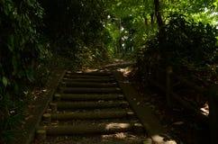 在Yaho日本的森林边路 免版税库存照片