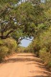 在Yala Nationalpark的Safai 免版税库存图片