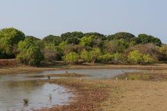 在Yala Nationalpark的Safai 库存图片
