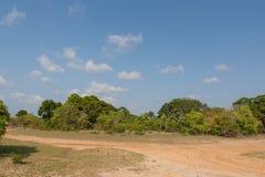 在Yala Nationalpark的Safai 免版税图库摄影