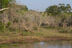 在Yala Nationalpark的Safai 免版税库存照片