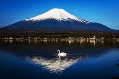 在Yamanaka湖的白色天鹅 免版税库存图片