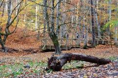 在Yedigoller七湖自然公园的秋天博卢/土耳其的 库存图片