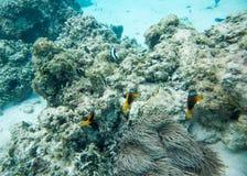 在Yejele海滩的礁石生活 免版税库存照片