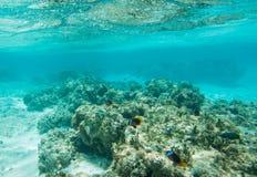 在Yejele海滩礁石的海洋生活变异 免版税库存图片